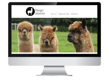 Filleigh-Alpacas-Website